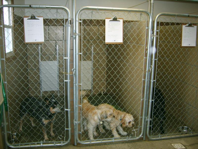 Outside Kennels